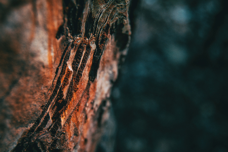 Close-up of pine bark in nature