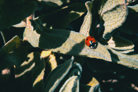 A small red ladybug on top of some leaves in nature