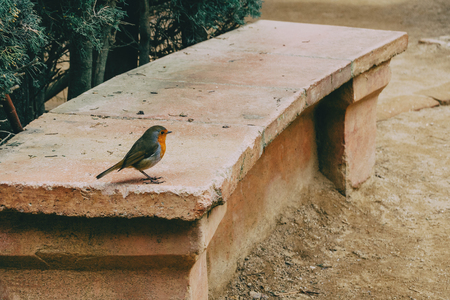 Close-up of a small bird on a stone bench in the park
