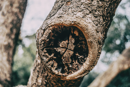 Close-up of a wound on the trunk of a scarred tree in nature