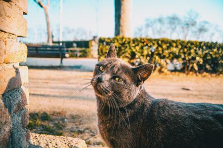 Stray gray cat in a city park