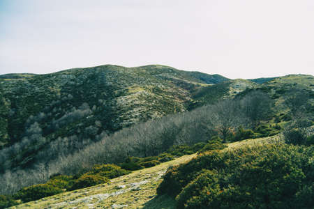 Landscape of some hills covered of green shrubs and trees