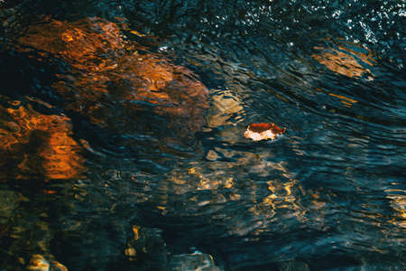 A dry fallen leaf floating on the surface of the water in a river