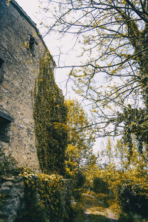 An old stone house covered with climbing plants isolated in a forest