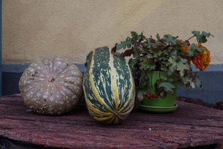 Still life of pumpkin, marrow squash and a flower pot with flowers and berries on a wooden round table