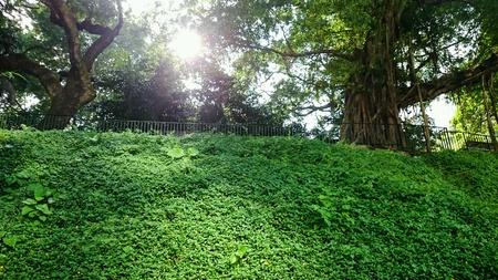 hk: Green Garden HK