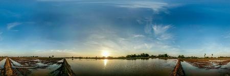 paddy field: Sunshine at paddy field