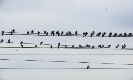 Birds sitting on power line, flying and sitting  photo