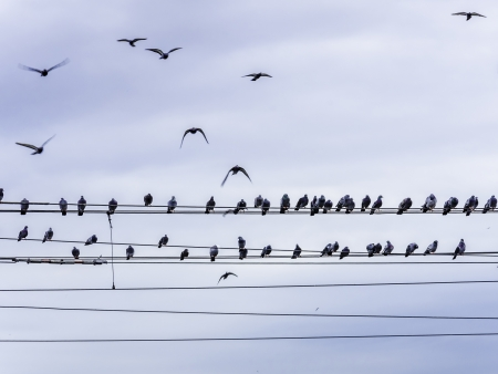 Birds sitting on power line, flying and sitting. photo