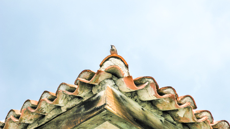Tile roofs with bird and blue sky Standard-Bild