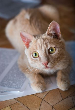 age 5: Red kitten is lying on the sheets of paper with text. Age: 5 months.