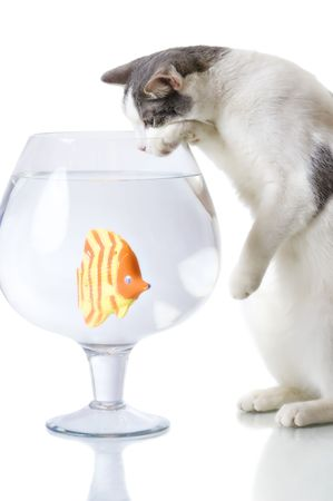 Domestic cat catching artificial fish in big glass isolated on white photo