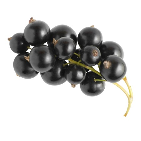 Cluster of fresh black currant isolated on white background