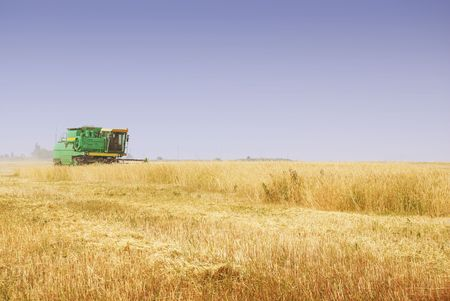 Green medium harvester is working in a wheat field. Focus on harvester Stock Photo