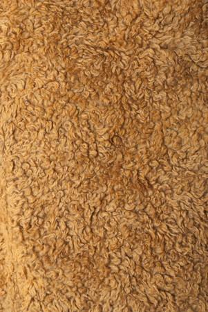 Soft texture of sheep fur. Inner part of winter coat
