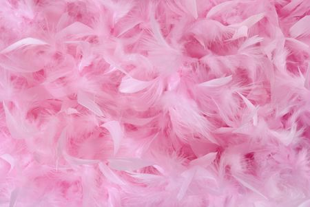 Fluffy bird feathers in pastel colors. Soft romantic background