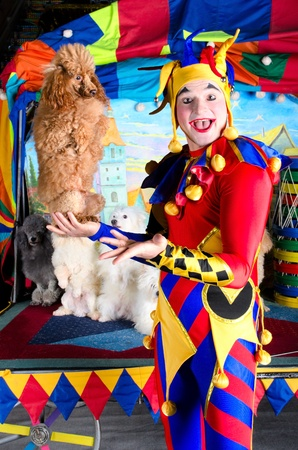circus stage: Wide smiling harlequin clown in hat is holding red poodle on his palm.