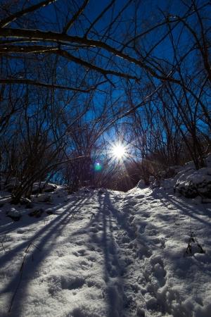 wildwood: road in the frosty wood, italian alps Stock Photo