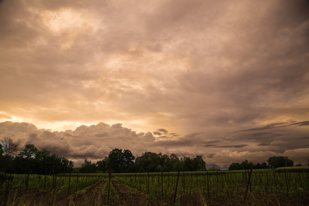 storm is coming on a corn field photo