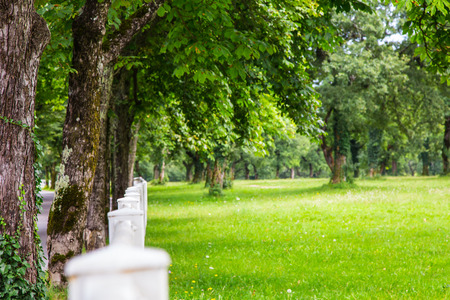 trees with white fence in the Slovenian countryside photo