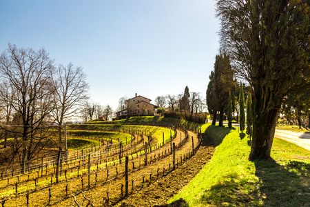 vineyards of italy in early spring in a sunny afternoon photo