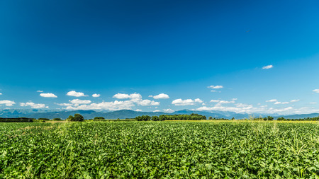 ciel avec nuages: a july morning in the fields of Friuli Venezia-Giulia, Italy