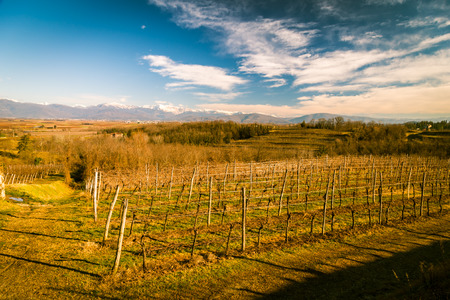 vineyards of italy in early spring in a sunny morning Stock Photo