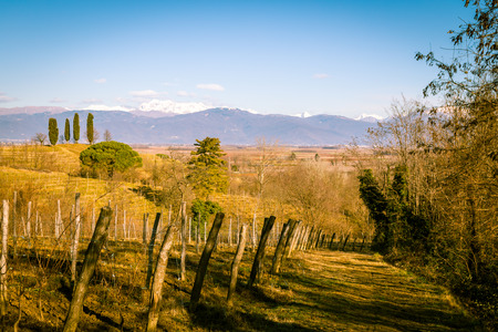 wine road: vineyards of italy in early spring in a sunny morning Stock Photo