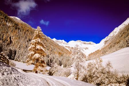 ski walking: wood full of snow in the italian alps Stock Photo