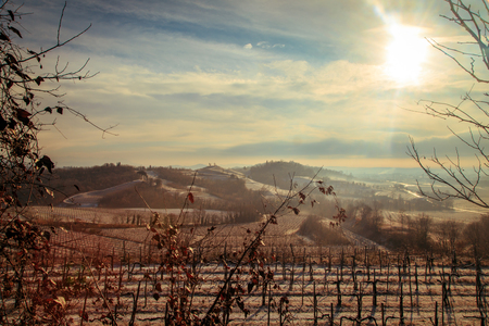 covered fields: snow and ice in the vineyard of Friuli, Italy
