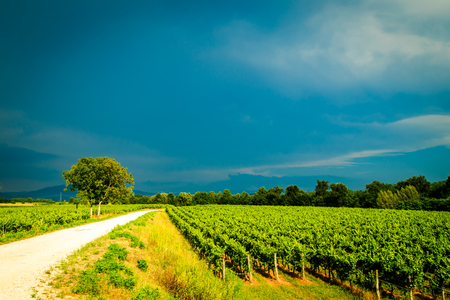 Storm is approaching the vineyards in the fields of Collio, Italy Stock Photo