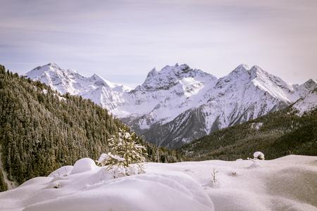 wood full of snow in the italian alps Stock Photo