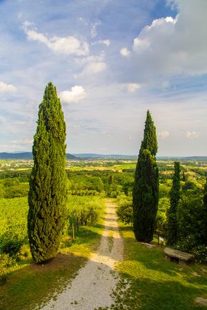 Der schöne Weinberg von Collio, Friaul-Julisch Venetien, Italien