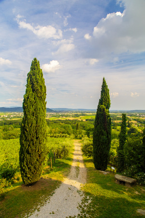 The beautiful vineyard of Collio, Friuli Venezia-Giulia, Italy Imagens