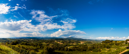 The italian vineyards at the border with Slovenia in a summer afternoon