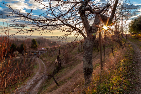Winter sunset in the vineyard of Savorgnano, Friuli Venezia-Giulia, Italy