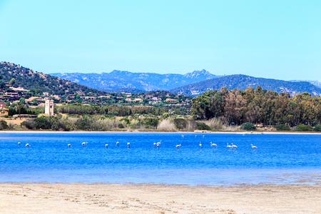 Flamingos in a lake of Sardinia Stock Photo