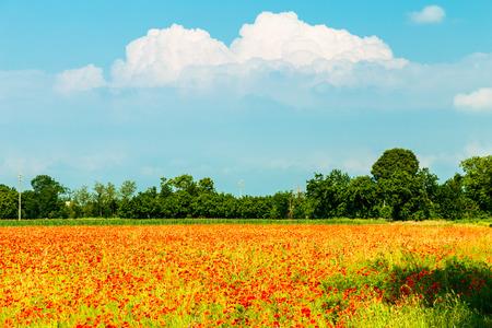 Fields in the countryside of Friuli Venezia-Giulia Standard-Bild