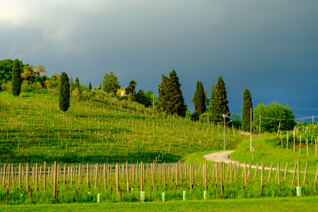 Storm in the vineyards of Friuli Venezia-Giulia, Italy