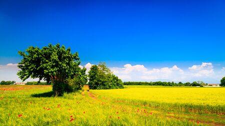 Fields in the countryside of Friuli Venezia-Giulia 写真素材