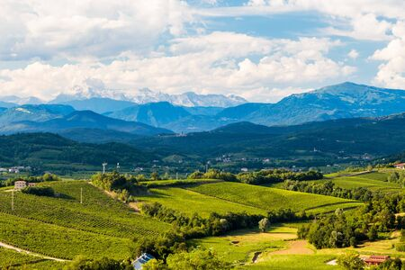 The italian vineyards at the border with Slovenia in a summer afternoon 写真素材