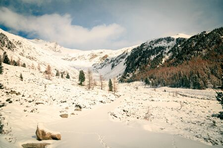 wood full of snow in the italian alps 스톡 콘텐츠