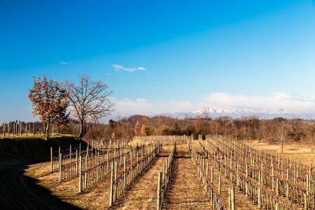 Sunset in the grapevine fields near the Abbey of Rosazzo, Collio, Friuli Venezzia-Giulia, Italy