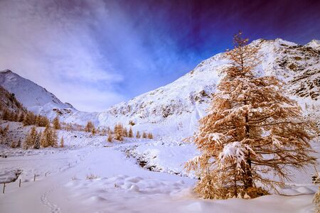 wood full of snow in the italian alps Stock Photo