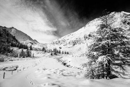 wood full of snow in the italian alps 版權商用圖片