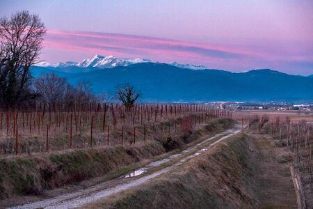 The sun goes down in the vineyards of Friuli Venezia-Giulia 版權商用圖片