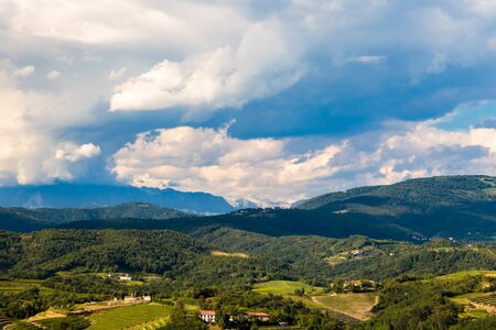 The italian vineyards at the border with Slovenia in a summer afternoon 版權商用圖片