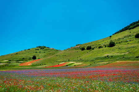 The colors of the fields of lenil full of flowers at Castelluccio di Norcia