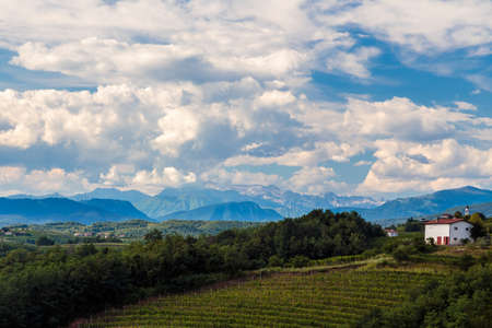 The Italian vineyards at the border with Slovenia in a summer afternoon 免版税图像