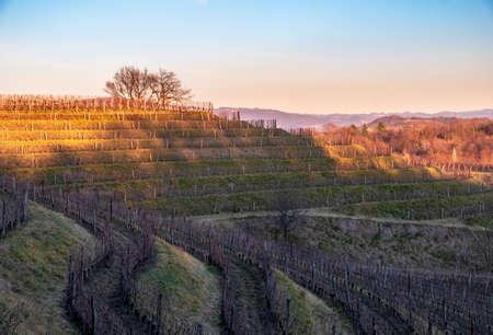 The sun goes down in the vineyards of Friuli Venezia-Giulia Archivio Fotografico